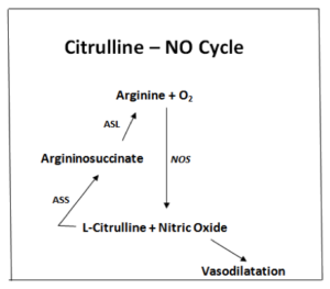 citrulline-nocycle