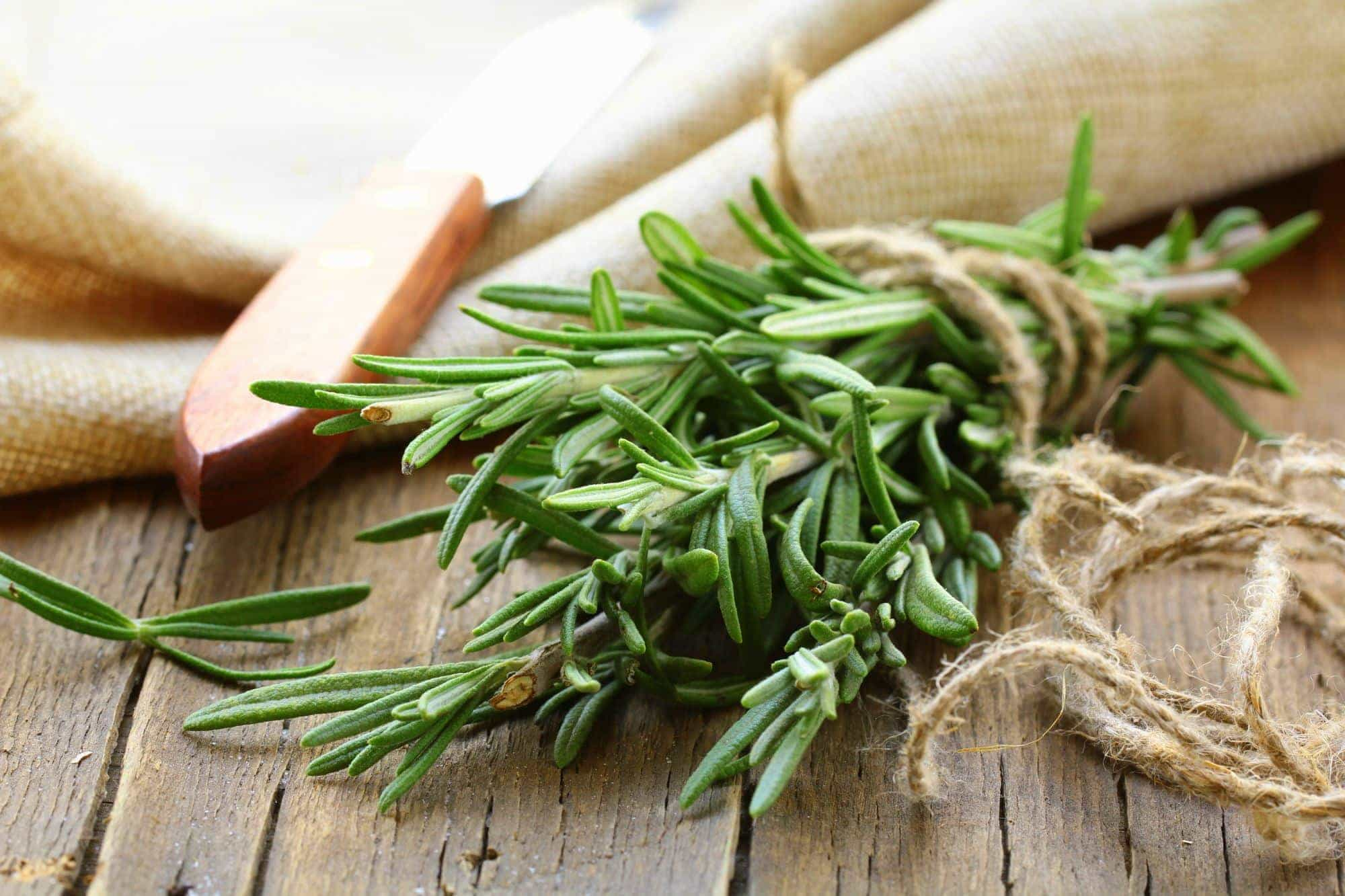 Treating Hair Loss with Rosemary