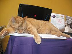 Rest Shield Kitty